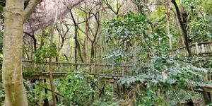 Lowveld National Botanical Garden